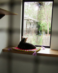 photo of the Cat House
